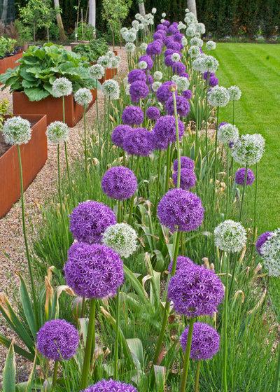 Modern Garden by Botanica Design
