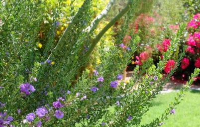 Southwest Gardener's June Checklist