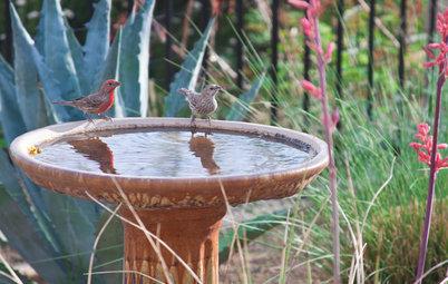 Вопрос: Как сделать свой сад привлекательным для птиц