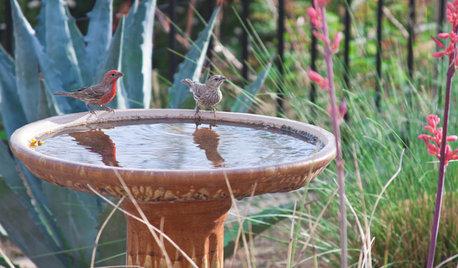 Make Your Garden a Haven for Backyard Birds
