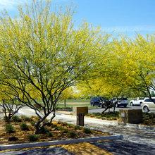 10 Essential Native Trees for Southwestern Gardens