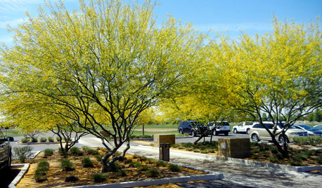 10 Essential Native Trees for Southwestern Gardens