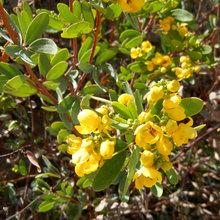 Warm Up Mild-Winter Gardens With This Cheery Australian Native