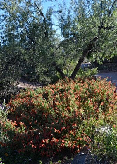 Southwestern Landscape by Noelle Johnson Landscape Consulting