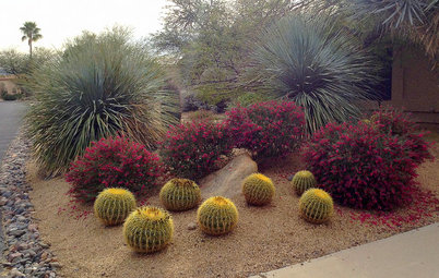 Paint the Southwest Winter Garden in Color