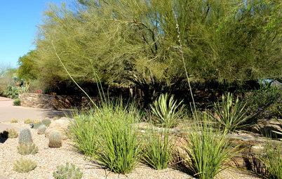 Plant New Mexico False Yucca for Spiky Garden Texture
