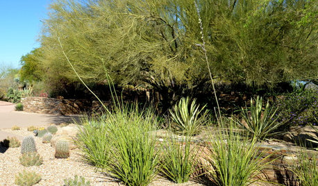Plant New Mexico False Yucca for Spiky Garden Texture