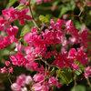 10 Flowering Vines for Southwestern Gardens