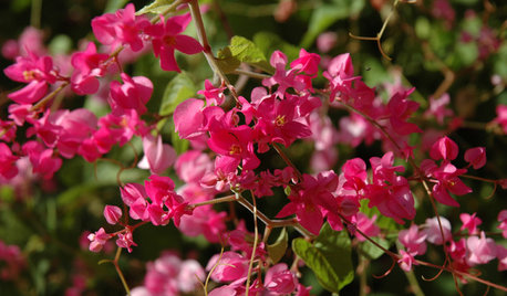 10 Flowering Vines for Southwestern Gardens