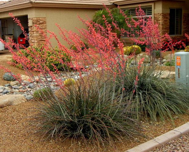 American Southwest Garden by Noelle Johnson Landscape Consulting
