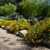 10 Fall-Blooming Shrubs for Southwest Gardens