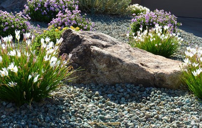 Great Design Plant: Showers Bring Zephyranthes Flowers