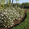 9 Deer-Resistant Flowering Shrubs to Plant This Fall