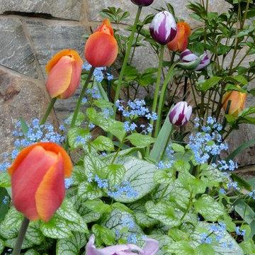 Spring Bulb Designs