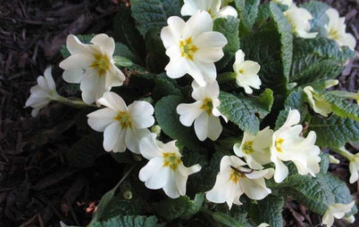 7 Great Container Plants for Early-Spring Appeal