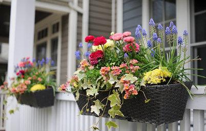鉢で楽しむ春の寄せ植え
