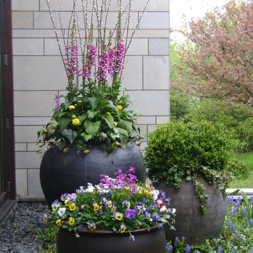 Spring Flower Containers & Annual Display