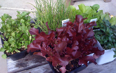 Seeds or Seedlings? How to Get Your Garden Started