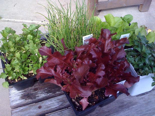 Garden Spring seedlings