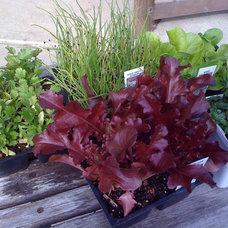Landscape Spring seedlings