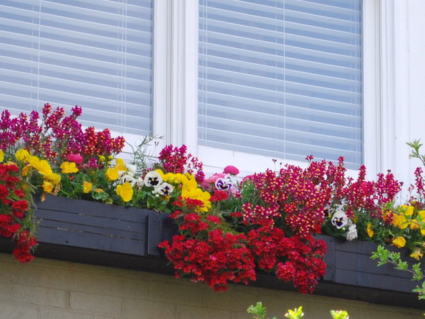 Traditional Landscape by The Windowbox Gardener