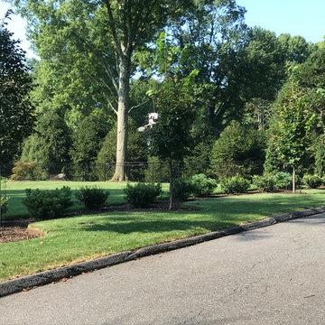 Stamford Modern - Planting Improvements & Zen style garden