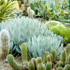 Traditional Landscape Stanford Cactus Garden