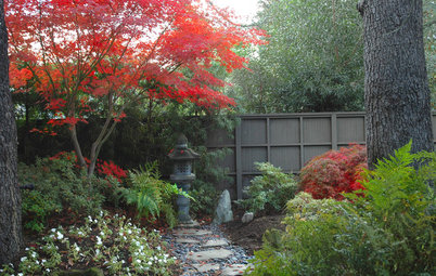 Lay of the Landscape: Create the Beauty of a Japanese Garden