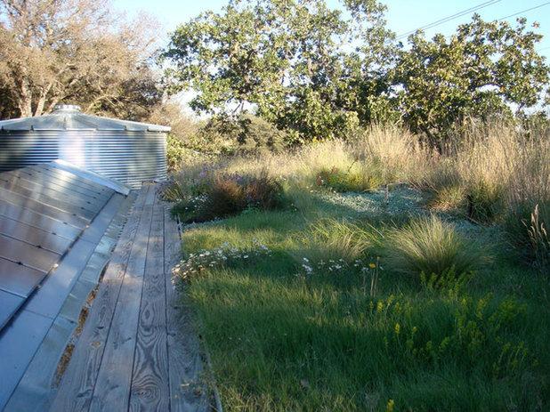 Modern Landscape by Casey Boyter Gardens