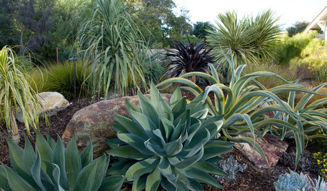 Winning Garden Combo: Agaves and Grasses