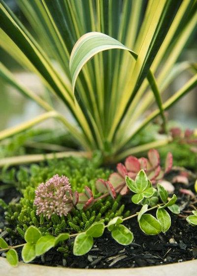 12 piante sempreverdi da giardino per l 39 inverno vi for Piccoli alberi sempreverdi