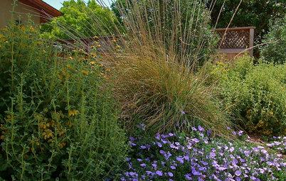 Great Design Plant: Deer Grass
