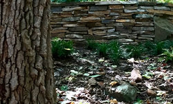 Study in Texture:  Tree and Stone