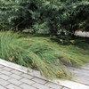 Protect a Precious Resource With a Rain Garden