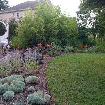 Suburban woodland garden