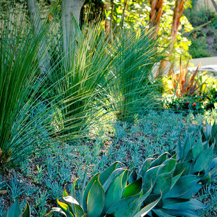Design ideas for an expansive contemporary front yard xeriscape in Los Angeles.