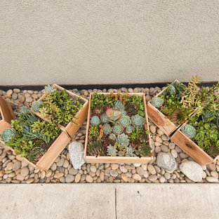 Succulent Garden for Small Spaces