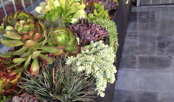 Succulent Landscapes, Gardens & Containers