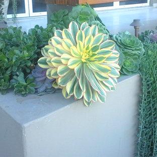 Esempio di un piccolo giardino xeriscape design esposto a mezz'ombra in cortile in primavera con un giardino in vaso e pavimentazioni in cemento