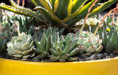 3 Steps to Creating Quick, Easy and Colorful Succulent Containers
