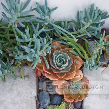 Succulents and Pavers