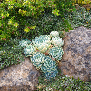 Inspiration for a small eclectic drought-tolerant and full sun front yard stone garden path in San Francisco for summer.