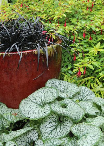 Wie l sst sich ein schattengarten sch n gestalten - Schattengarten gestalten ...
