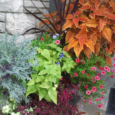 Contemporary Landscape by Blue Earth Gardening, Inc