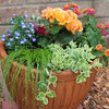 Houzz Call: Show Us Your Summer Container Gardens