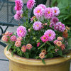10 Sizzling-Hot Summer Container Gardens
