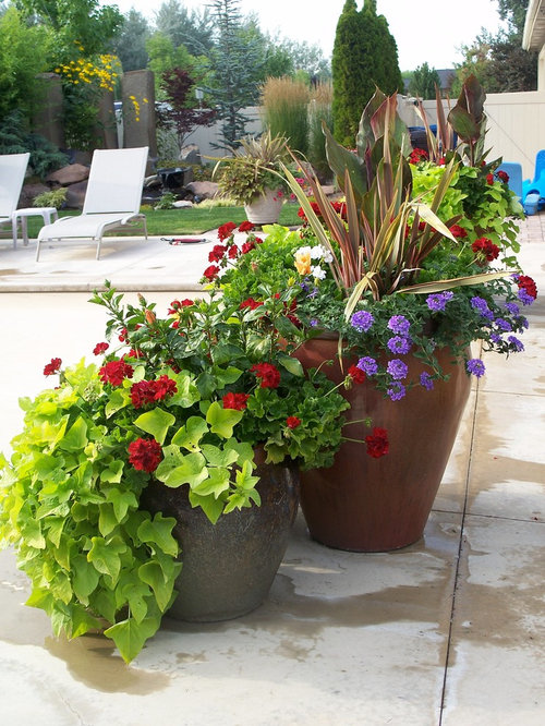 Summer container plants houzz - Container gardens for sun ...