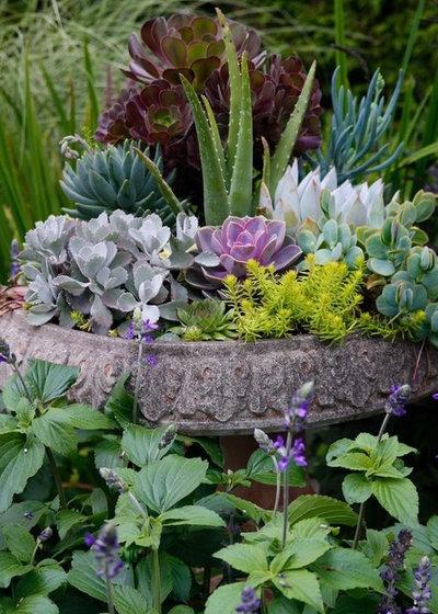 Современный Сад by Pot Incorporated