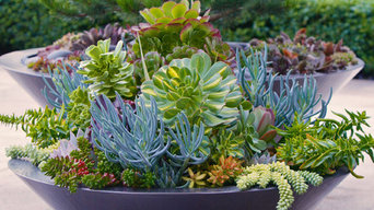 Summer containers...