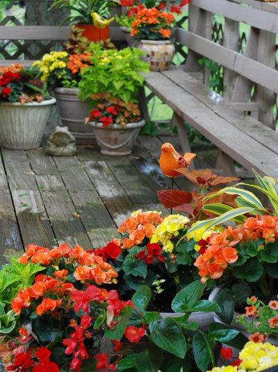 Классический Сад by The Windowbox Gardener